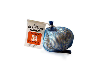 ELEPHANT GARLIC - Product of USA