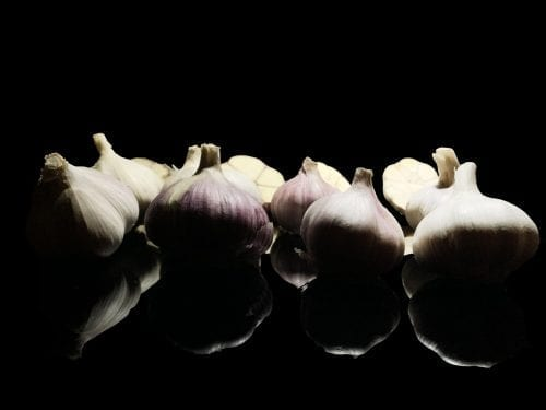All garlic strains JPG